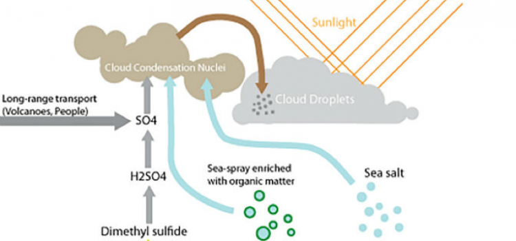 Phytoplankton and the Ocean Breeze